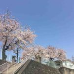 上城保育園2